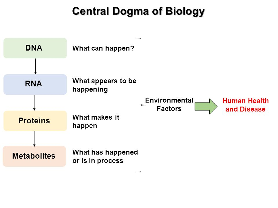 Molecular Genetics Worksheet : Central dogma of biology worksheet checks