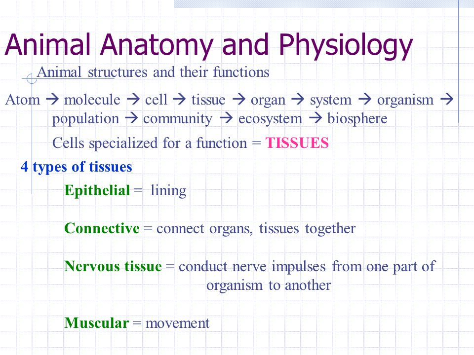 Animal Anatomy and Physiology - ppt video online download
