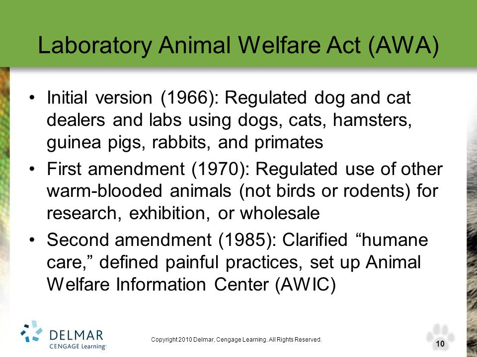 the issues of the animal abuse and the animal welfare act of 1966