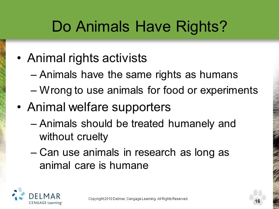 should animals be used for research purpose Should animals be used in research this involves detailed examination of the procedures and the number and type of animals used the use of animals in research.