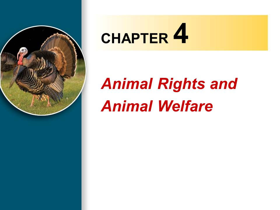 the rights of animals essay Animal rights is a very controversial issue with many different groups of people with differing opinions that want their voices on this issue heard many of these groups believe that animals have inherent value and deserve rights, and the majority of people believe this as well, but exactly which rights do they deserve.