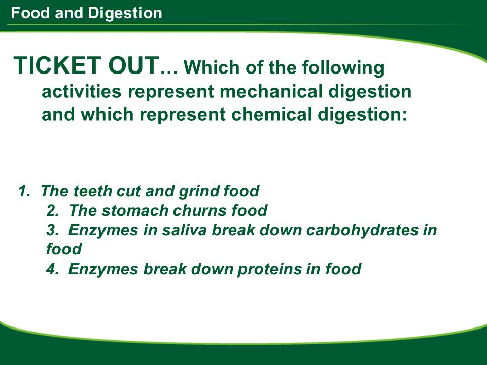 Activity 1 chemical digestion