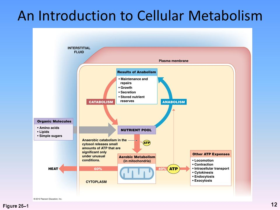 An Introduction to Cellular Metabolism