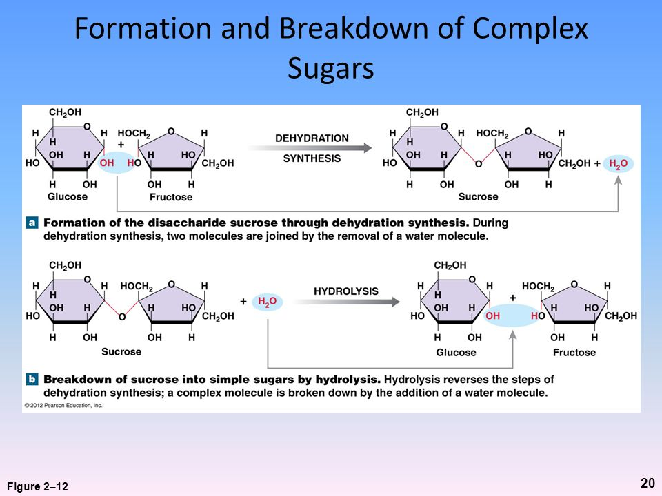 Formation and Breakdown of Complex Sugars