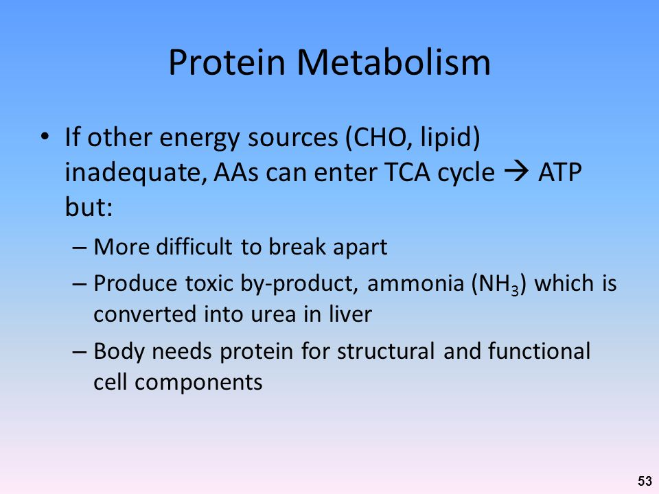 Protein Metabolism If other energy sources (CHO, lipid) inadequate, AAs can enter TCA cycle  ATP but: