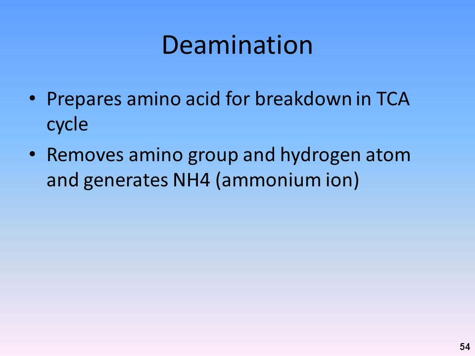 Deamination Prepares amino acid for breakdown in TCA cycle