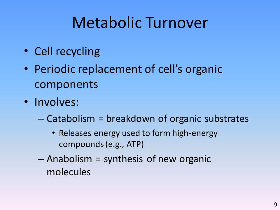 Metabolic Turnover Cell recycling