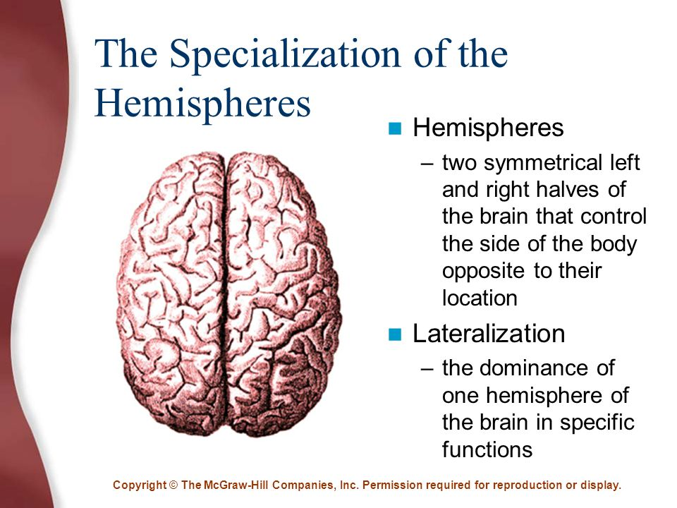 a study on the brains hemispheric specialisation Full-text paper (pdf): hemispheric specialization of language: an eeg study of bilingual hopi indian children see all 50 citations see all 49 references download citation share download brain and its environment.