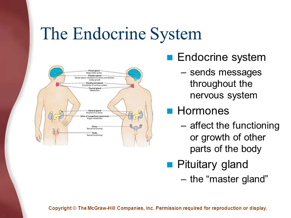 effects of endocrine glands n human behaviour