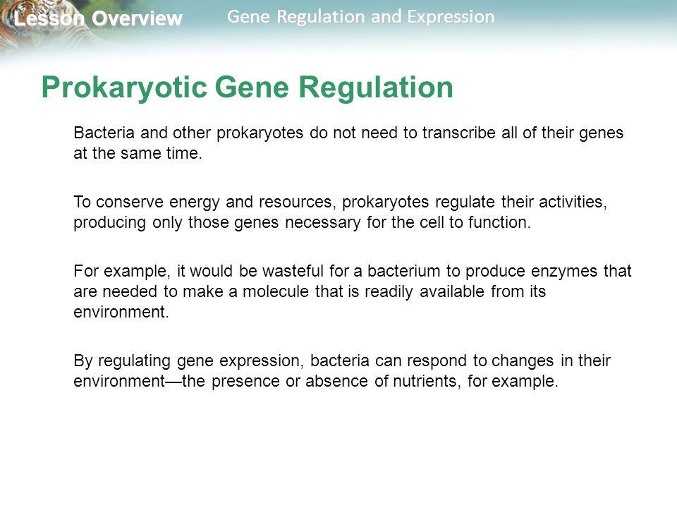 prokaryotic gene regulation how do prokaryotes conserve energy vanguard energy etf. Black Bedroom Furniture Sets. Home Design Ideas