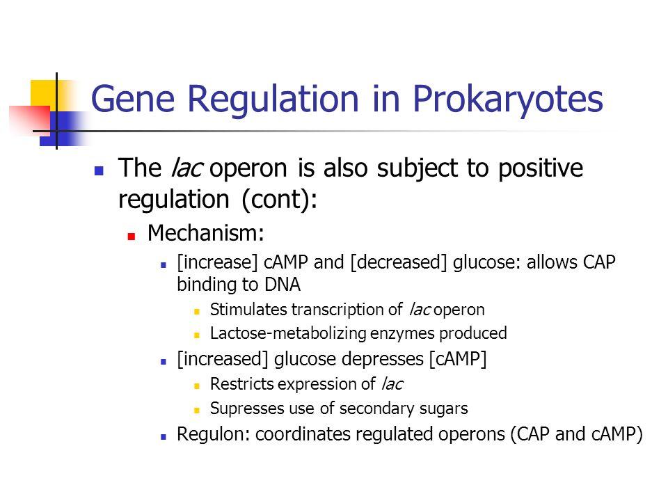beneficial prokaryote