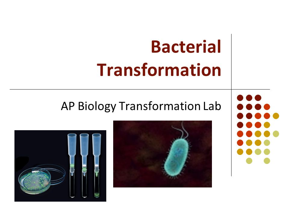 a lab on transforming plasmid activity Bacterial transformation & supplemental activities part a: bacterial transformation your teacher has the tube containing the plasmid will now come around to your lab.