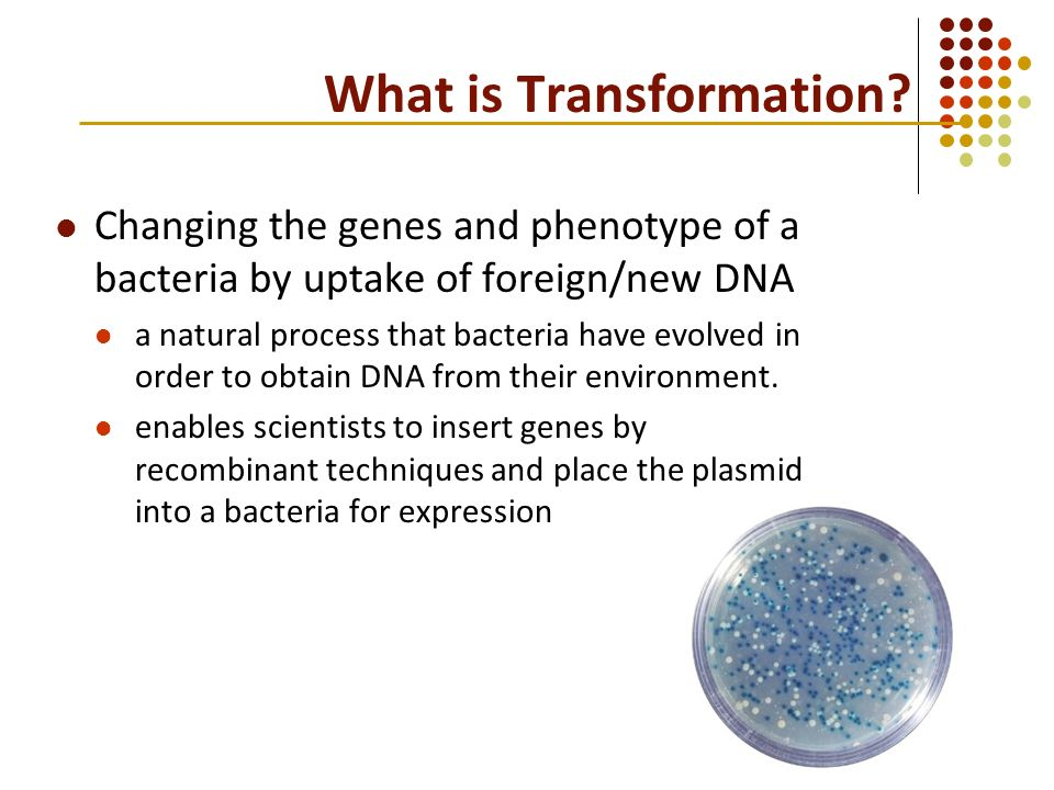 dna transformation Transformation is the process by which foreign dna is introduced into a cell transformation of bacteria with plasmids is important not only for studies in bacteria but also because bacteria are used as the means for both storing and replicating plasmids.