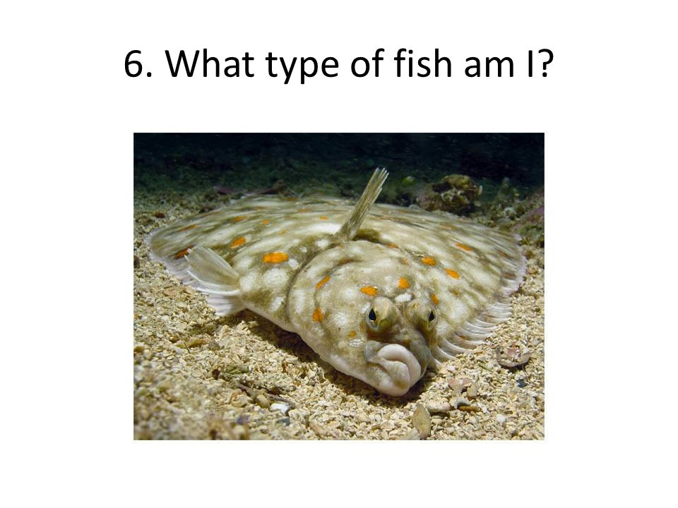 Deep blue sea science olympiad ppt download for What kind of fish is this
