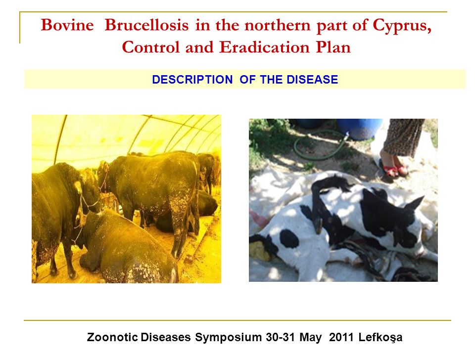 Bovine Brucellosis in the northern part of Cyprus, Control and Eradication Plan