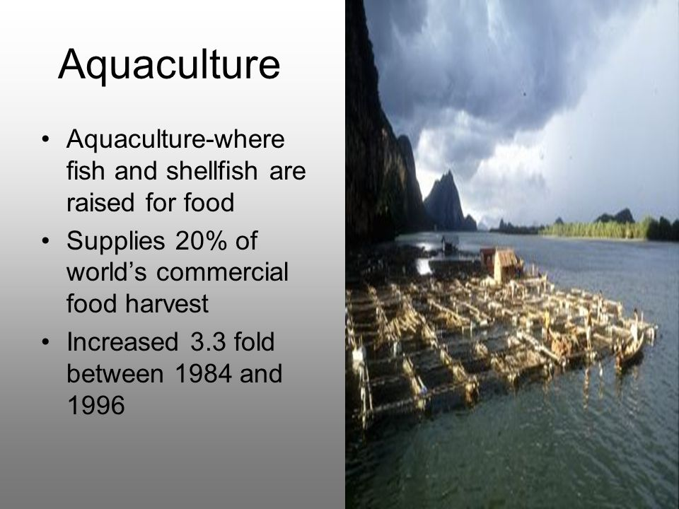 the advantages of aquacultured organisms and the drawbacks of wild caught organisms Also, if these creatures are different in how they respond to micro-organisms, there is a risk of them possessing a disease which could be caught by humans it is dangerous to be closely attached to these animals when the are not always predictable.