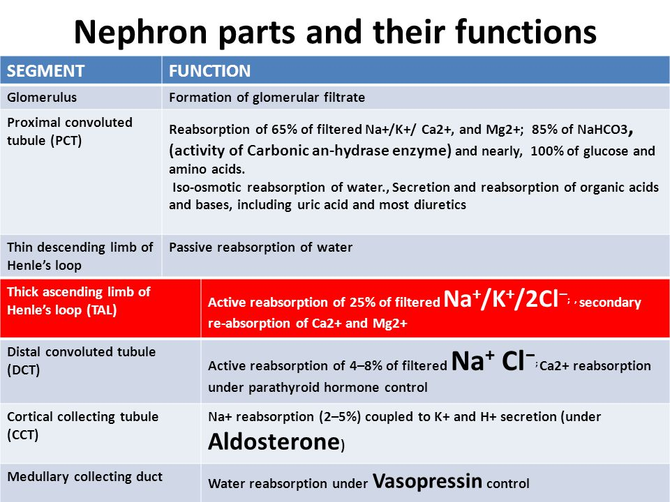 Nephron parts and their functions