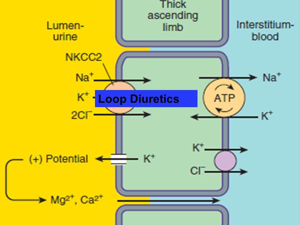 Loop Diuretics