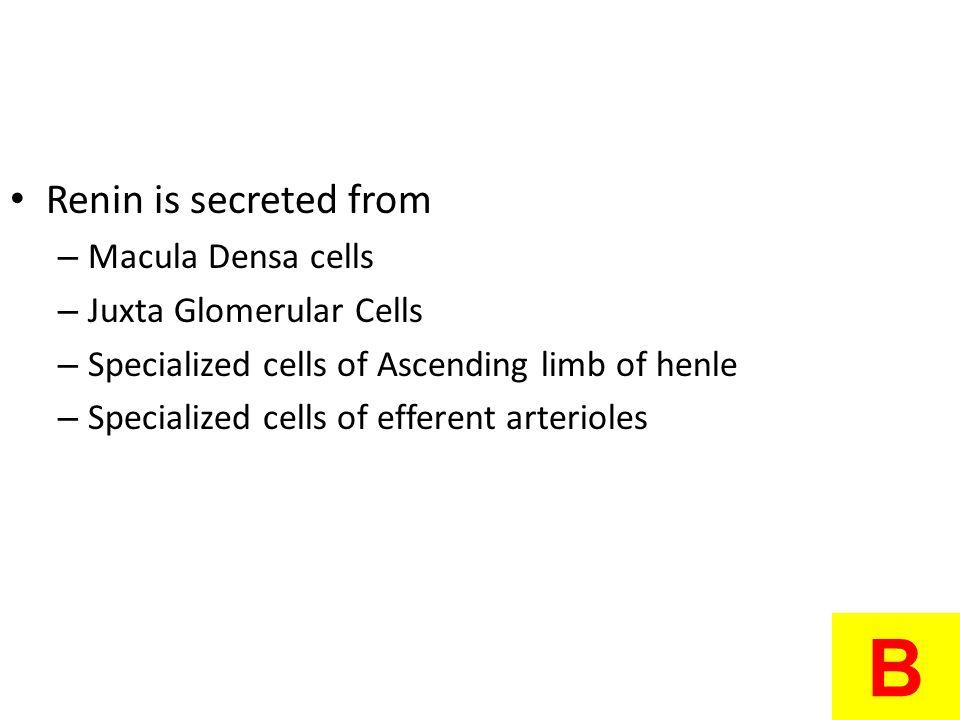 B Renin is secreted from Macula Densa cells Juxta Glomerular Cells