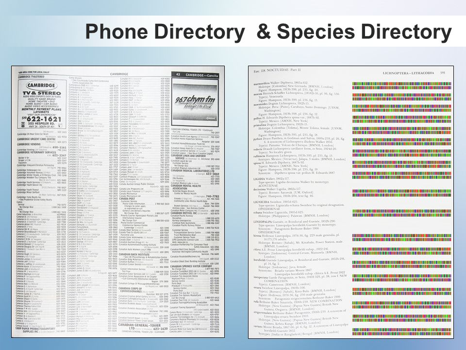 Phone Directory & Species Directory