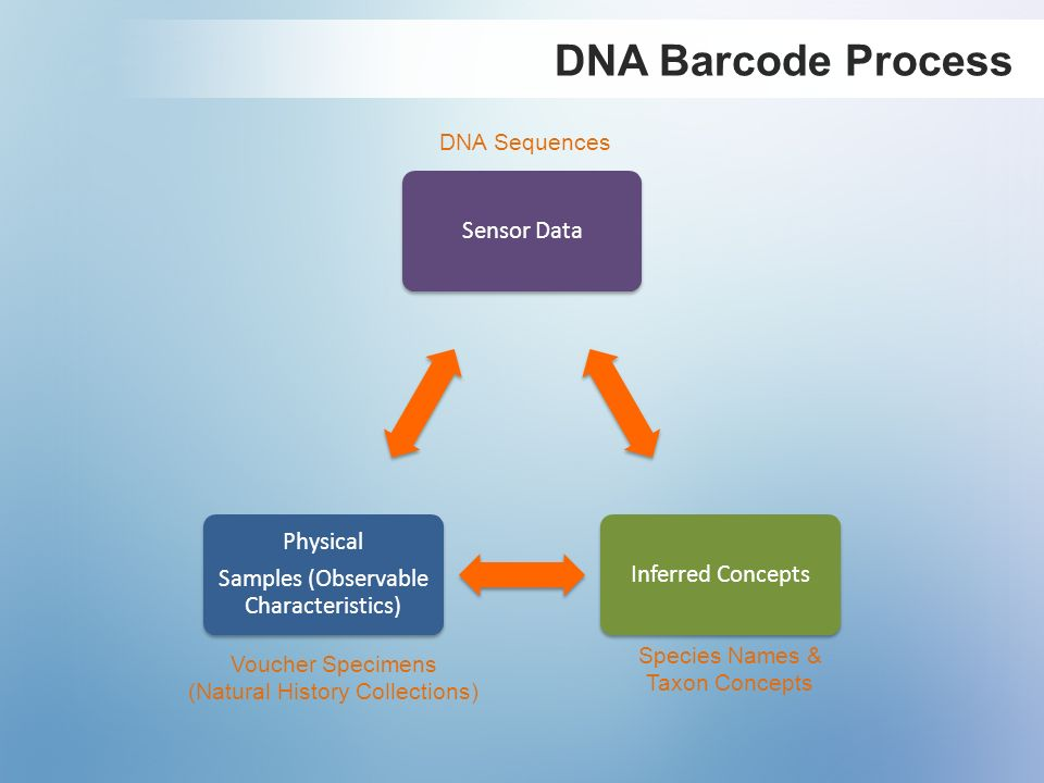 DNA Barcode Process DNA Sequences Species Names & Voucher Specimens