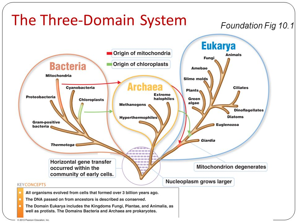 What is the Three-Domain System?
