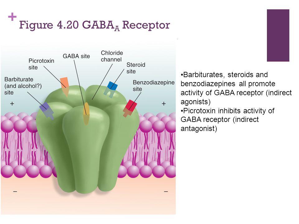 Ambien gaba receptors