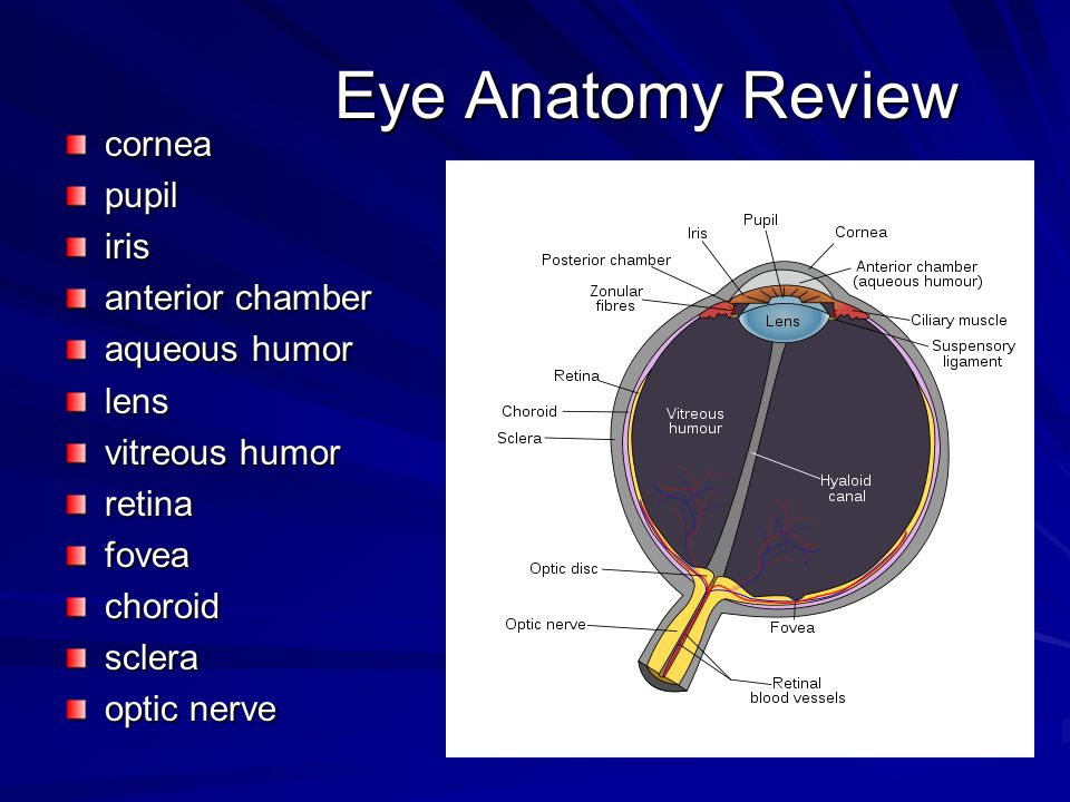 Eye Anatomy Review cornea pupil iris anterior chamber aqueous humor