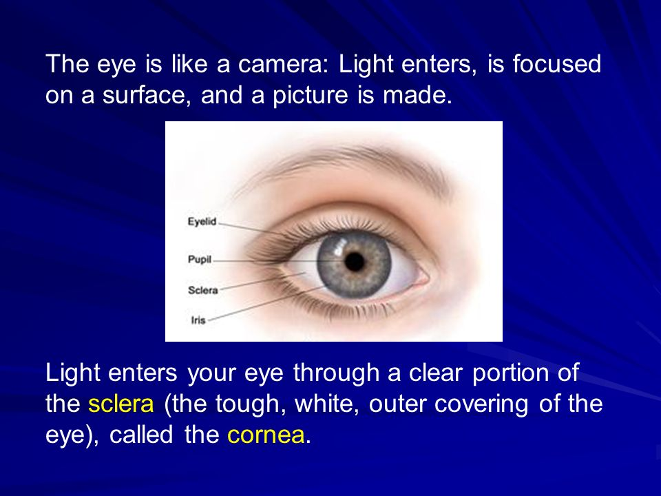 The eye is like a camera: Light enters, is focused on a surface, and a picture is made.