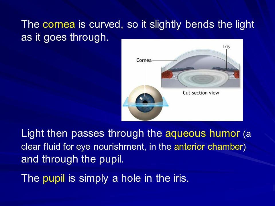 The cornea is curved, so it slightly bends the light as it goes through.