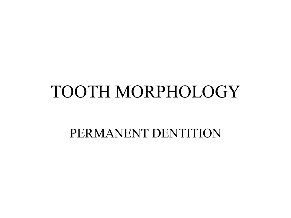 TOOTH MORPHOLOGY PERMANENT DENTITION. - ppt video online download