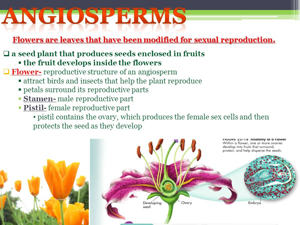 Flowers are leaves that have been modified for sexual reproduction.