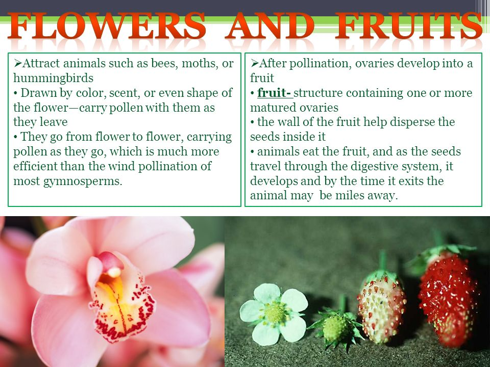 Flowers and fruits Attract animals such as bees, moths, or hummingbirds.