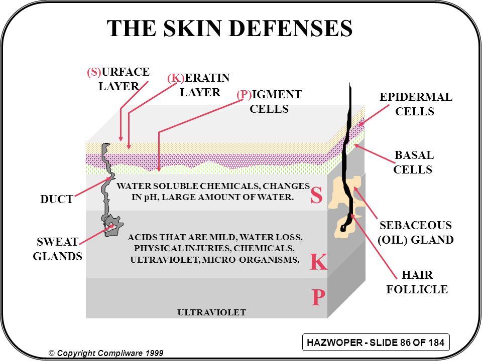 THE SKIN DEFENSES S K P (S)URFACE LAYER (K)ERATIN LAYER (P)IGMENT