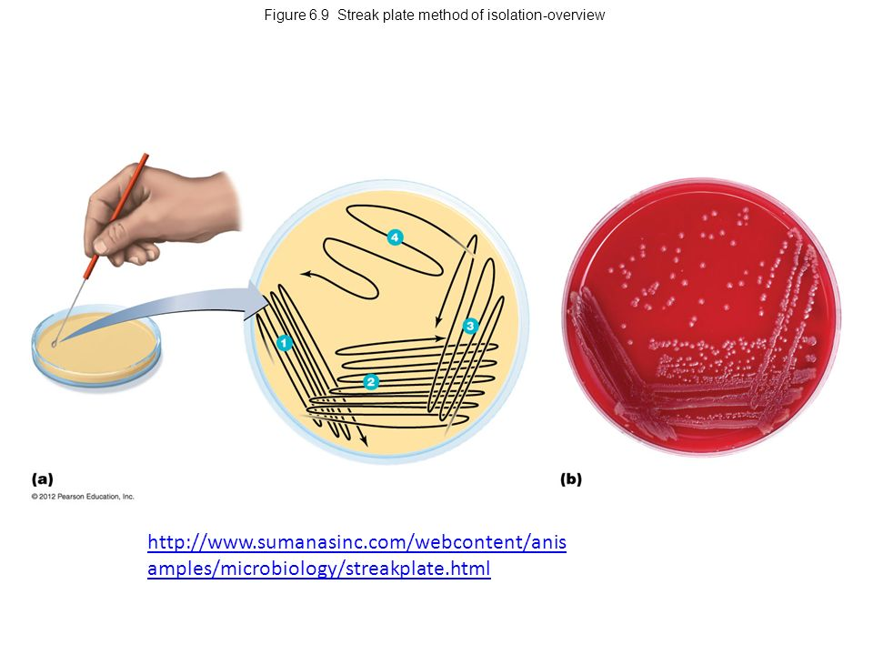 streak plate isolation Isolation procedure of colonies on the surface of agar, employed to bring  click  here to search on 'streak plate method' or equivalent.