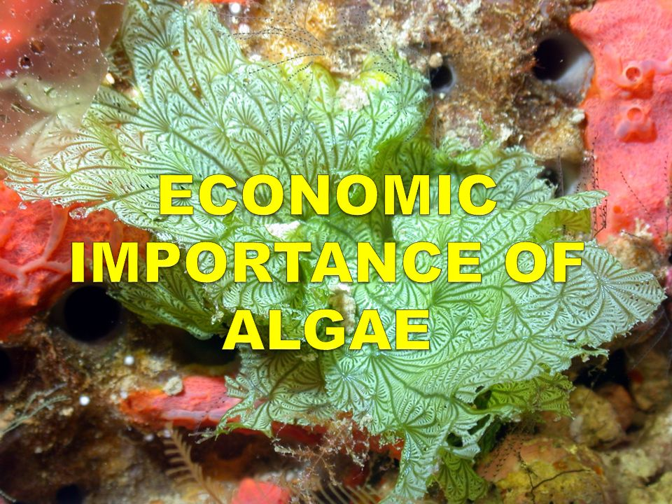 ecological and economical importance of algae