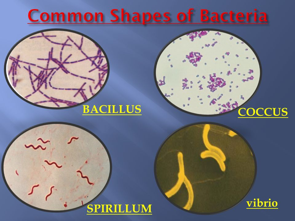 Classification of bacteria based on shape pdf