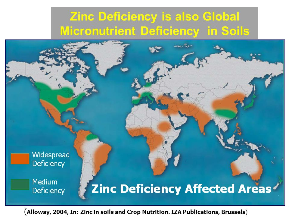 Micronutrient malnutrition ppt video online download for Soil zinc deficiency