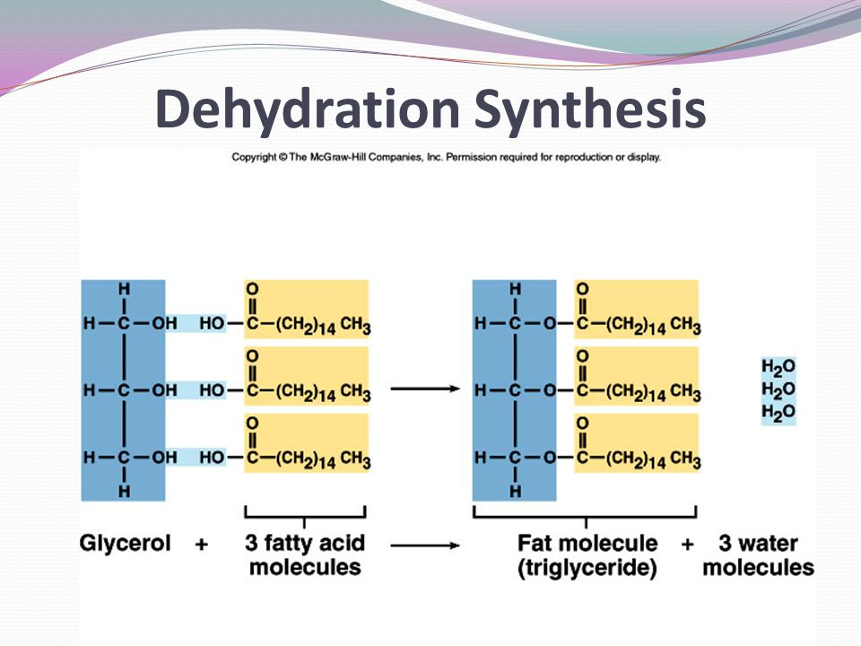 Dehydration Synthesis Example Lipids. - ppt download