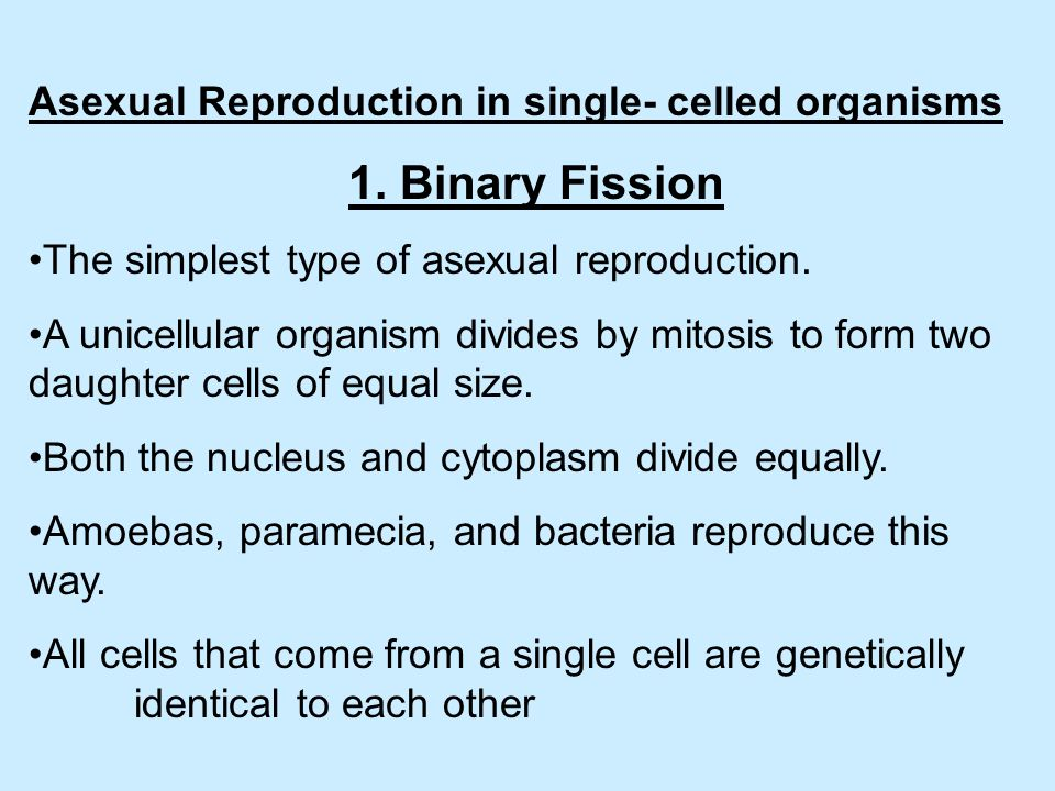 Cell division used for asexual reproduction by unicellular organisms images 45