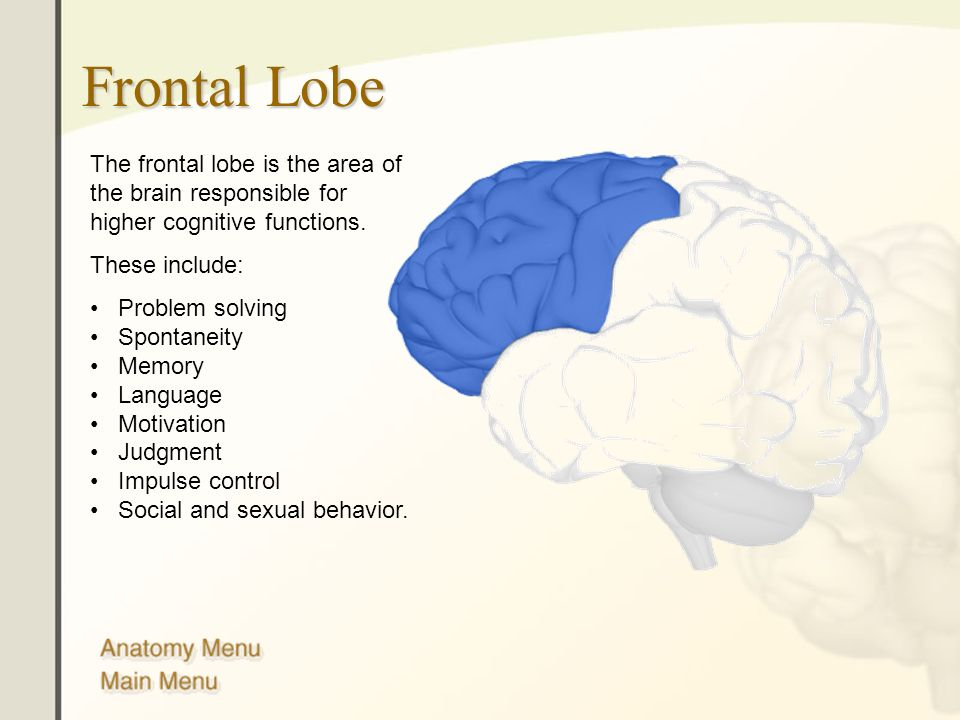 Frontal Lobe The frontal lobe is the area of the brain responsible for higher cognitive functions. These include: