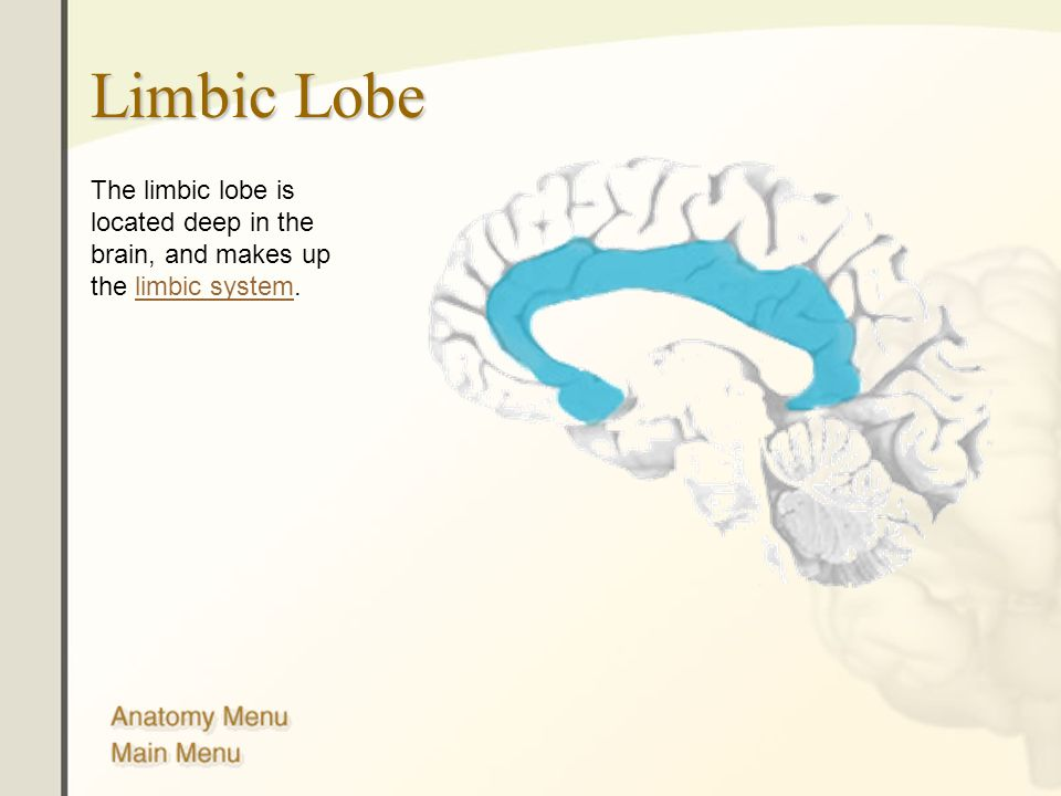 Limbic Lobe The limbic lobe is located deep in the brain, and makes up the limbic system.