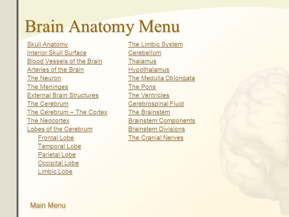 Niedlich Human Brain Anatomy Ppt Galerie Anatomie Ideen Finottifo