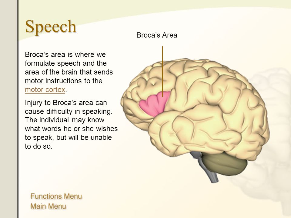 Speech Broca's Area. Broca's area is where we formulate speech and the area of the brain that sends motor instructions to the motor cortex.