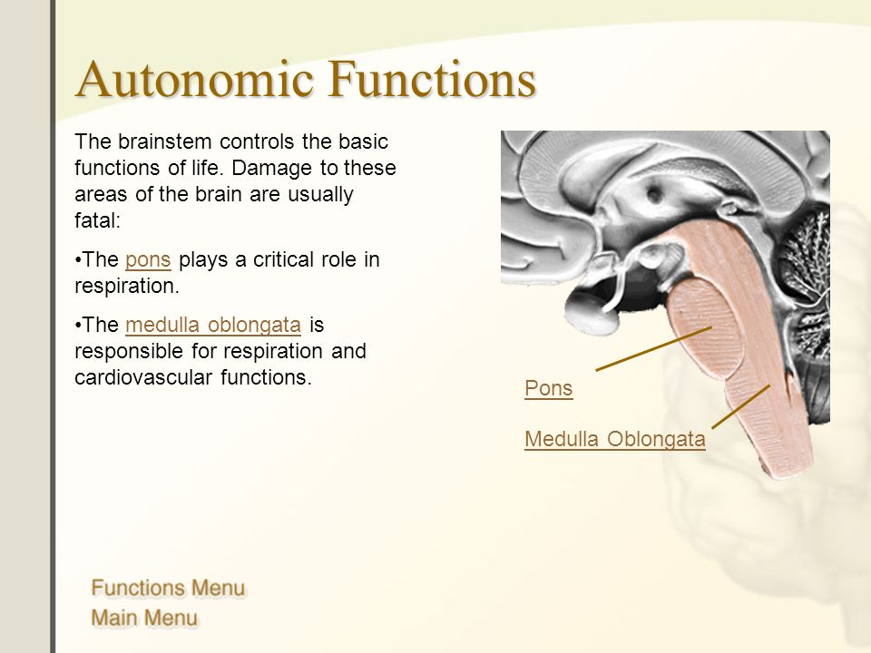 Autonomic Functions The brainstem controls the basic functions of life. Damage to these areas of the brain are usually fatal:
