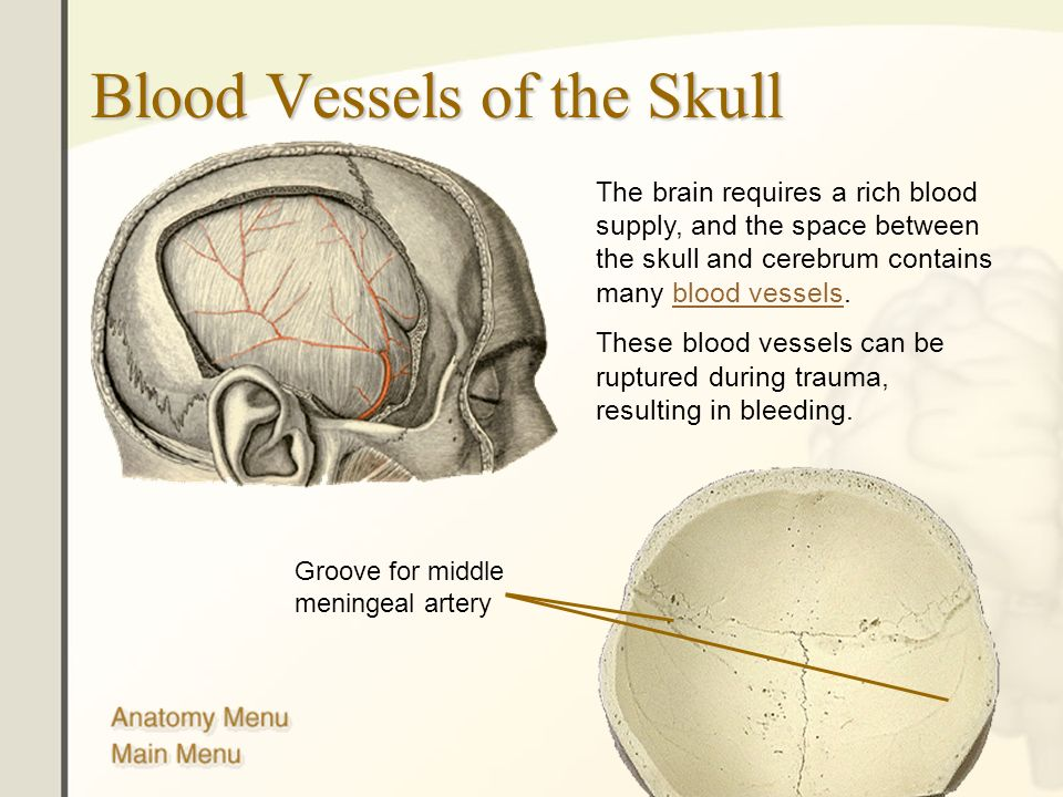 Blood Vessels of the Skull