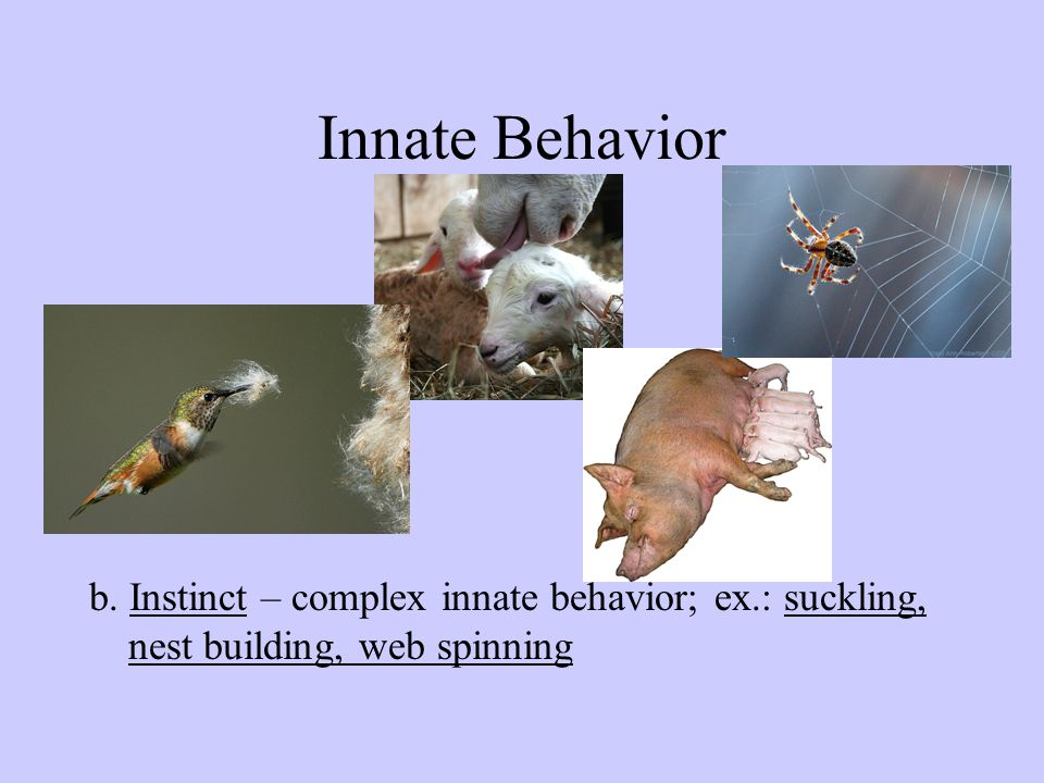Animal Behavior Ppt Video Online Download