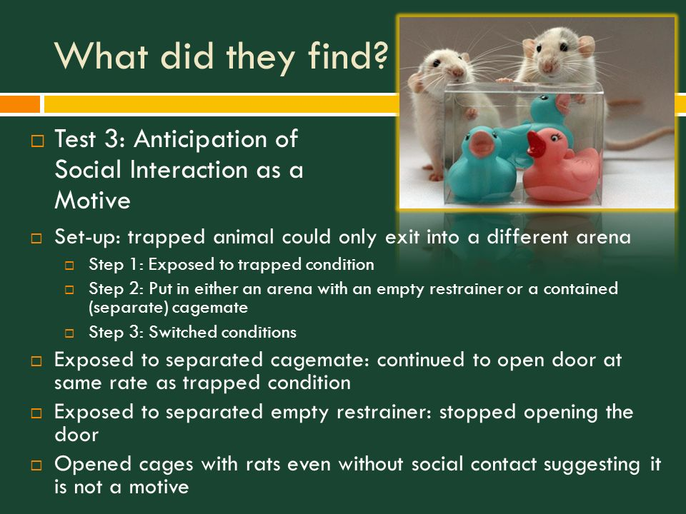 7 What ...  sc 1 st  SlidePlayer & Empathy and Pro-Social Behavior in Rats - ppt video online download pezcame.com