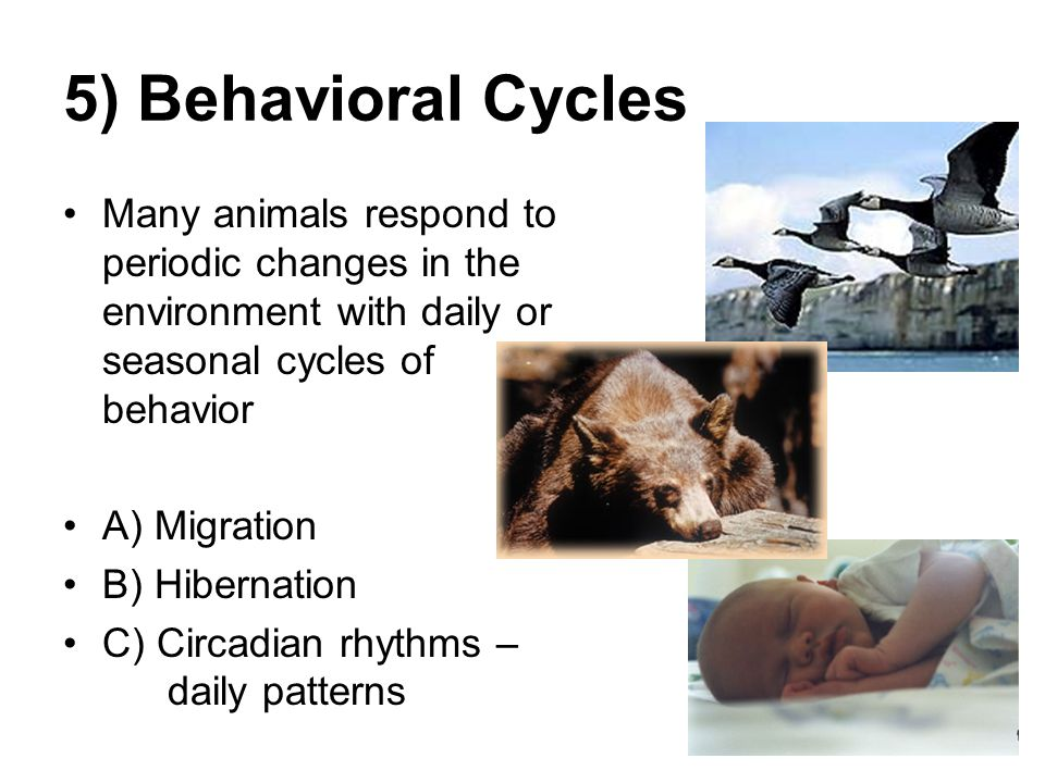 seven ways animals survive and respond their environment Gardens help the environment by reducing air and noise pollution, erosion, and energy costs, minimizing carbon footprint, filtering the groundwater, and providing a food and home source for various animals and insects.