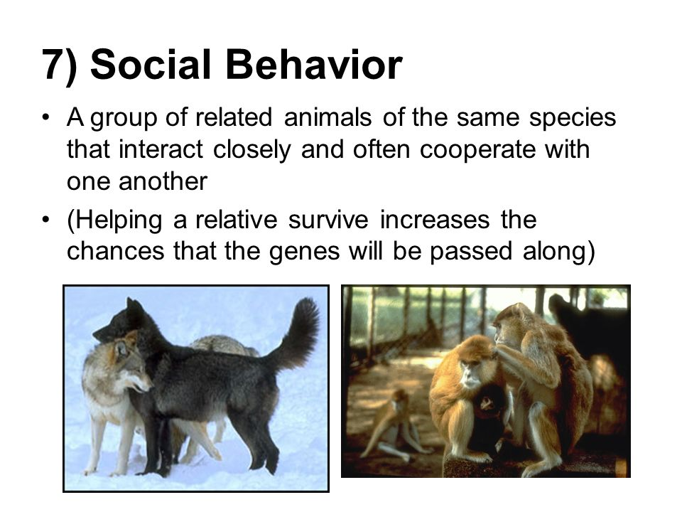 Sources of maladaptive behavior in 'normal' organisms ...